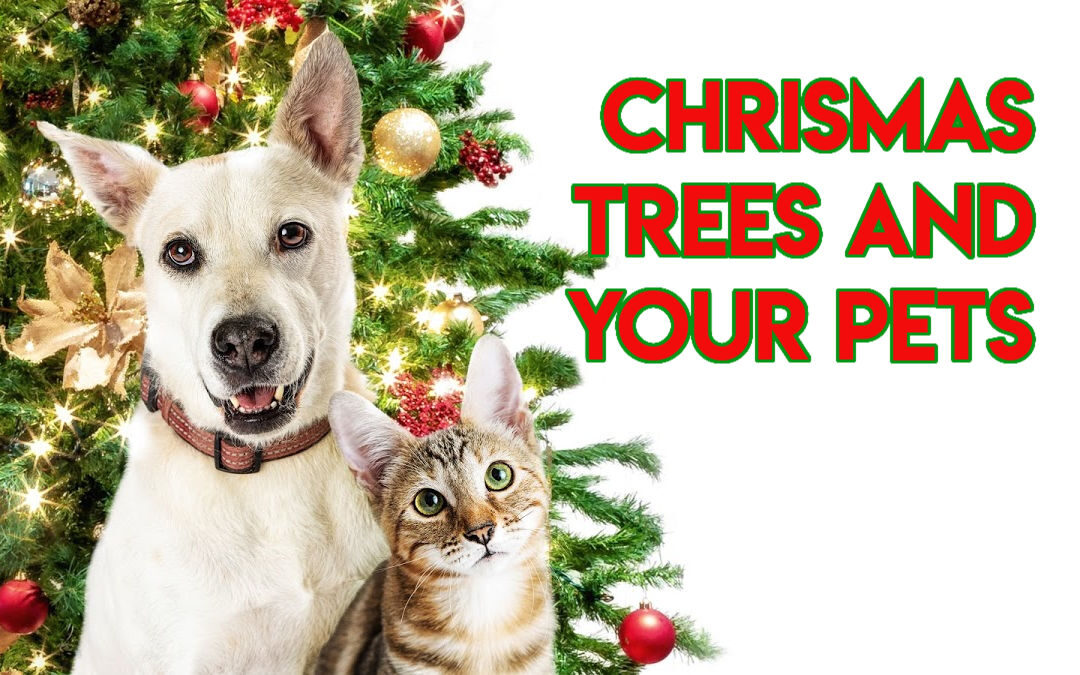 Christmas Trees and your Pets: Things to Consider